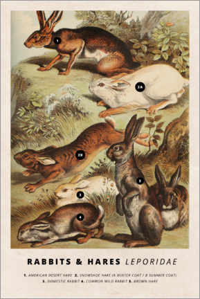 Premiumposter Rabbits and hares