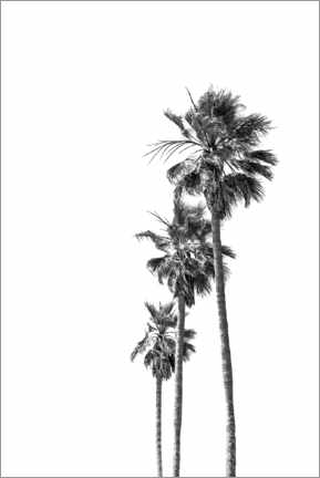 Premiumposter Black and white palm trees