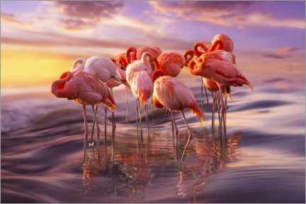 Premiumposter  Flamingo siesta - Adrian Borda
