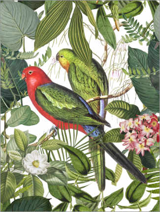 Canvastavla  Birds in the tropical paradise - Andrea Haase