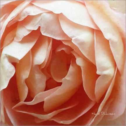 Premiumposter Mother's Day Rose