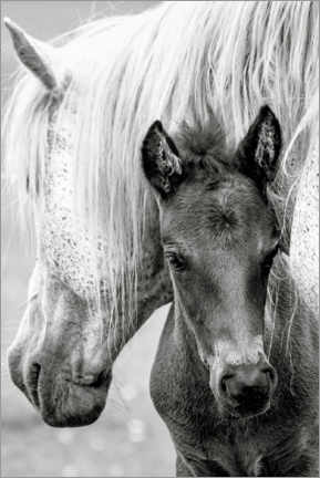 Premiumposter Mother with foal