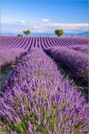 Premiumposter  Summer in Provence - Achim Thomae