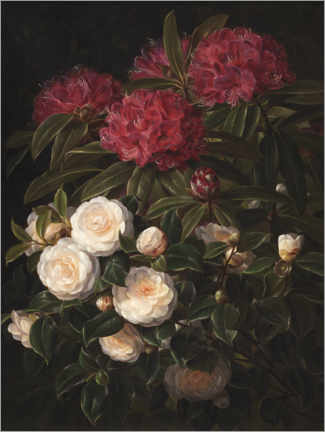 Premiumposter Camellias and rhododendrons