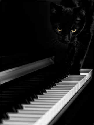 Canvastavla  Black cat on a piano - Oleksiy Maksymenko