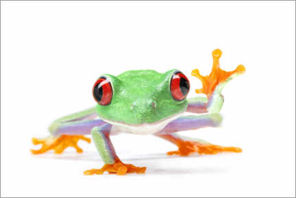 Canvastavla  Waving red-eyed tree frog - Artur Cupak