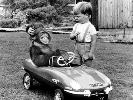 Canvastavla  Monkey sits in a child's car - John Drysdale