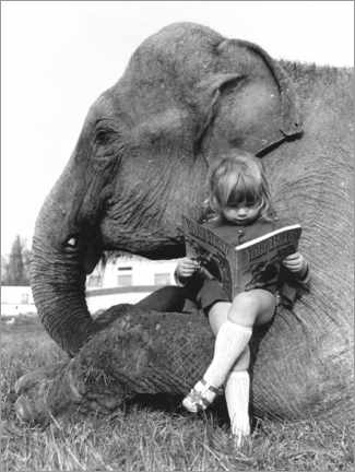 Akrylglastavla  Girl sits on elephant and reads - John Drysdale