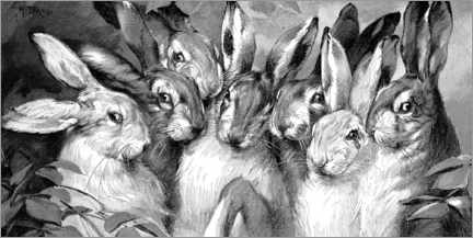 Canvastavla  Bunnies black and white - Michael Nitzschke