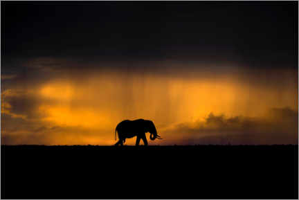 Premiumposter Elephant in the rain storm at sunset