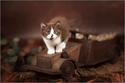 Aluminiumtavla  Kitten on a car - Janina Bürger