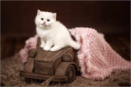 Premiumposter  Kitten on a wooden car - Janina Bürger