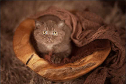 Trätavla  Baby cat lies in wooden bowl - Janina Bürger
