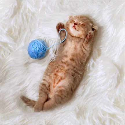 Premiumposter Kitten with a ball all of wool