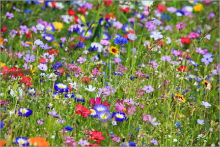 Premiumposter Colorful flower meadow
