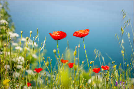 Premiumposter Poppies meadow by the lake