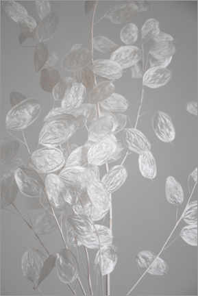 Aluminiumtavla  Silver leaf - branch of dried plant - Studio Nahili