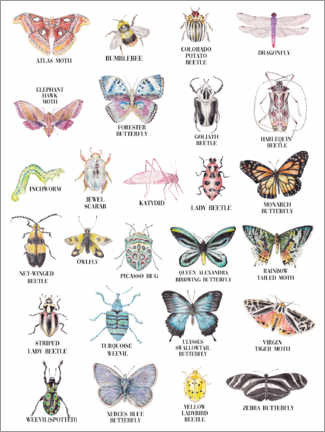 Premiumposter Insects ABC