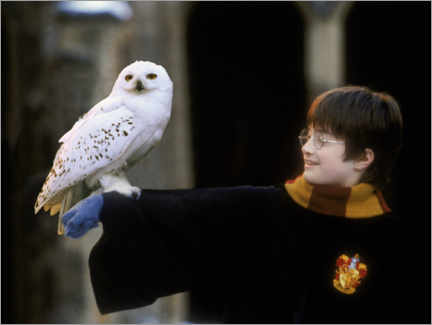 Aluminiumtavla  Harry Potter and the Sorcerer's Stone - Harry & Hedwig