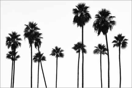 Premiumposter  Black California - Palm Trees L.A - Philippe HUGONNARD