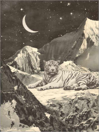 Premiumposter Tiger in the mountains
