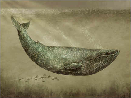 Premiumposter The Damask Whale