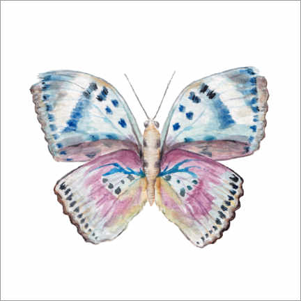Canvastavla  Pink and Powder Blue Butterfly - Wandering Laur