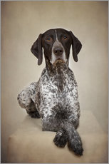 Galleritryck  German shorthaired pointer / 1 - Heidi Bollich