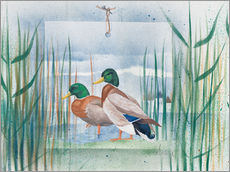 Självhäftande poster  Pair of wild ducks - Franz Heigl