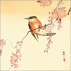 Självhäftande poster  Red Bird and Cherry Blossoms - Ohara Koson