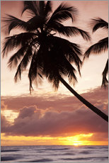 Galleritryck  Tropical sunset in Barbados, Caribbean - Angelo Cavalli