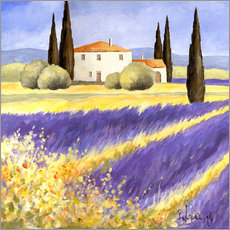 Galleritryck  Light of Provence - Franz Heigl