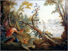Akrylglastavla  Lake with swans, a flamingo and a peacock - François Boucher