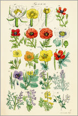 Självhäftande poster  Wildflowers - Sowerby Collection