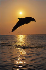 Självhäftande poster  Dolphin in the sunset - Tom Soucek
