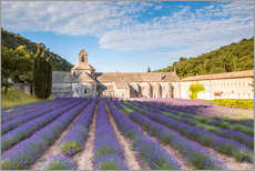 Galleritryck  Famous Senanque abbey with lavender field, Provence, France - Matteo Colombo