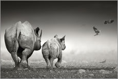 Galleritryck  Rhino cow with calf - Johan Swanepoel
