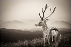 Galleritryck  Stag in the mountains