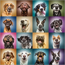Galleritryck  Funny dog faces - Manuela Kulpa