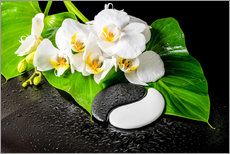 Galleritryck  White orchids and Yin-Yang stones