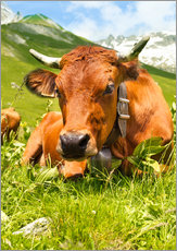 Galleritryck  Cow with bell on mountain pasture
