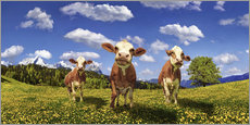 Galleritryck  Cows on the pasture - Michael Rucker
