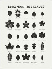Premiumposter European Tree Leaves