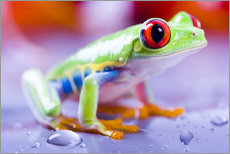 Galleritryck  colorful frog