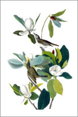 Canvastavla  Two birds with magnolia - John James Audubon