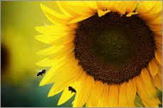 Galleritryck  Two bees in sunflower