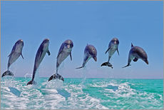 Galleritryck  6 dolphins jump out of the water - Gérard Lacz