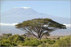 Galleritryck  Big tree in front of the Kilimanjaro - Joe & Mary Ann McDonald