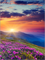 Galleritryck  Rhododendron blossom in the Carpathians