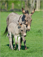 Självhäftande poster  Donkey mum and her little baby